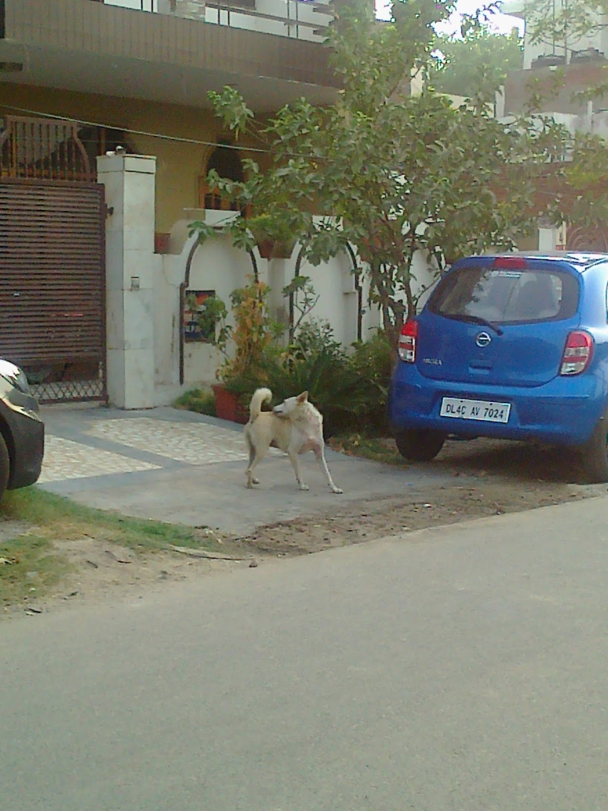 Are You Vexed by Dog Menace in Noida