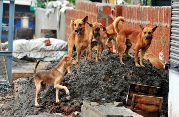Stray Dog Menace in Noida