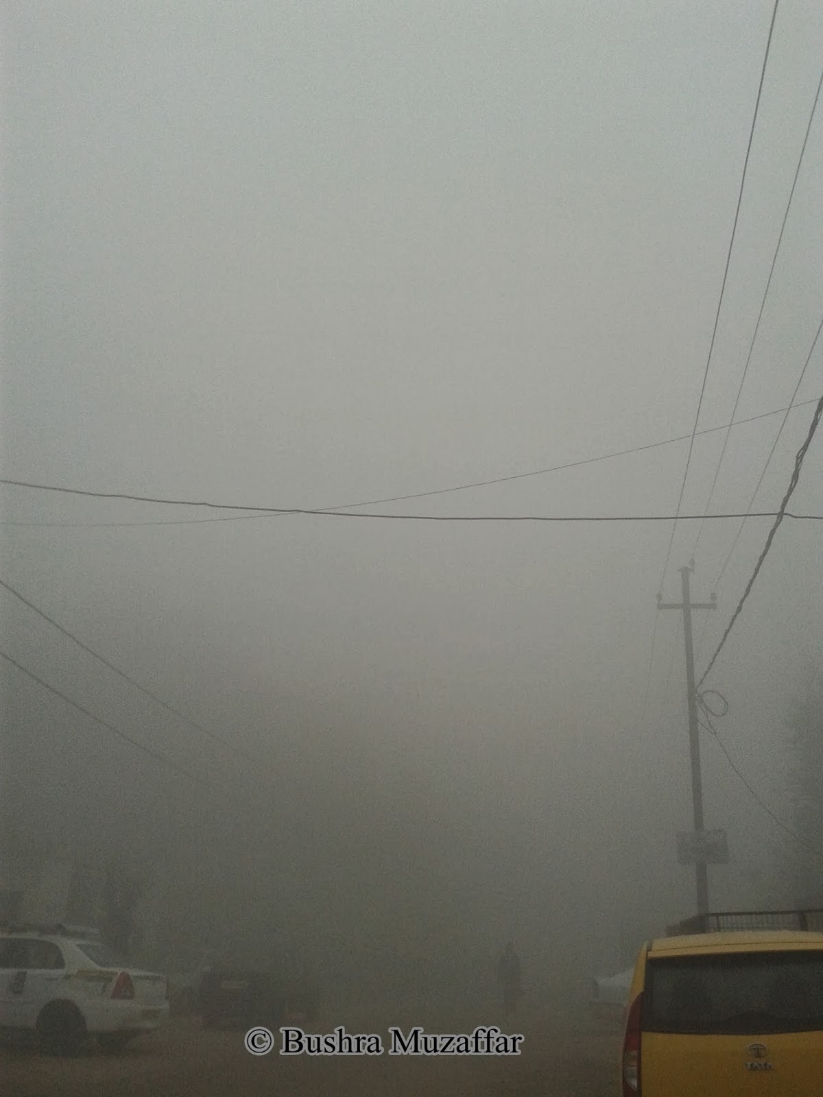 Dense Fog of the Season