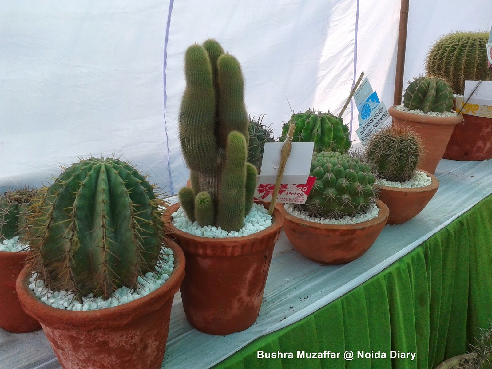 Cacti and Succulents at 28th Noida Flower Show