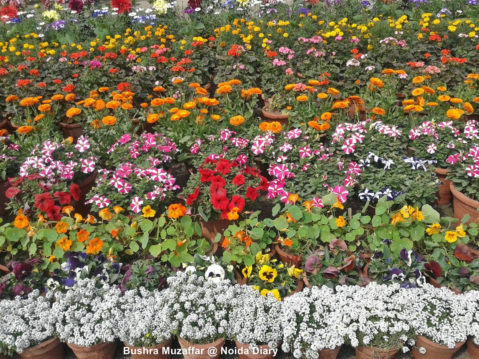 28th Noida Flower Show – 'Vasant Utsav' 2014