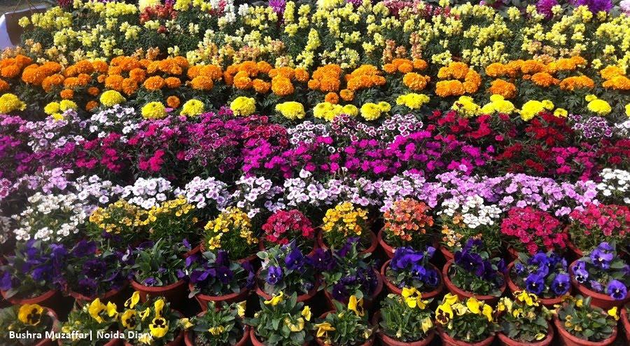 Noida Flower Show 2017