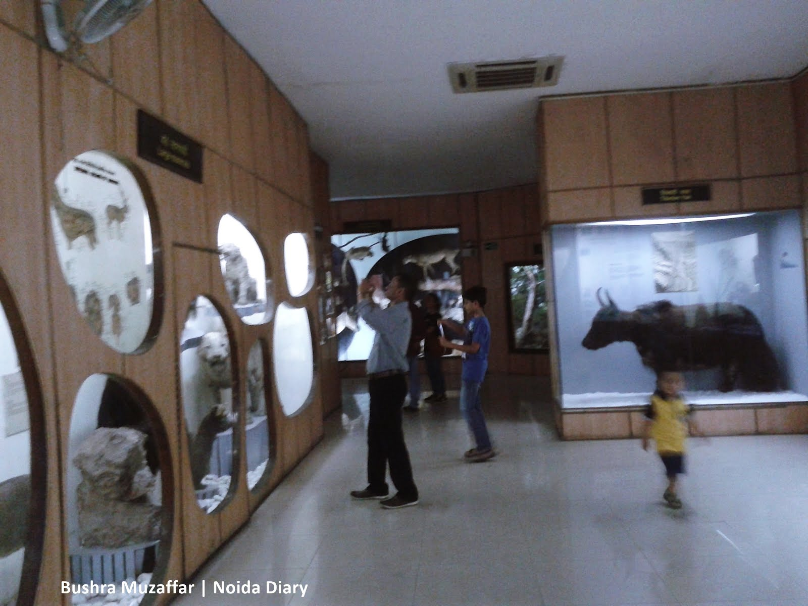 National Museum of Natural History – A Treasure Lost