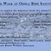 BNHS-Bird Walk at Okhla Bird Sanctuary