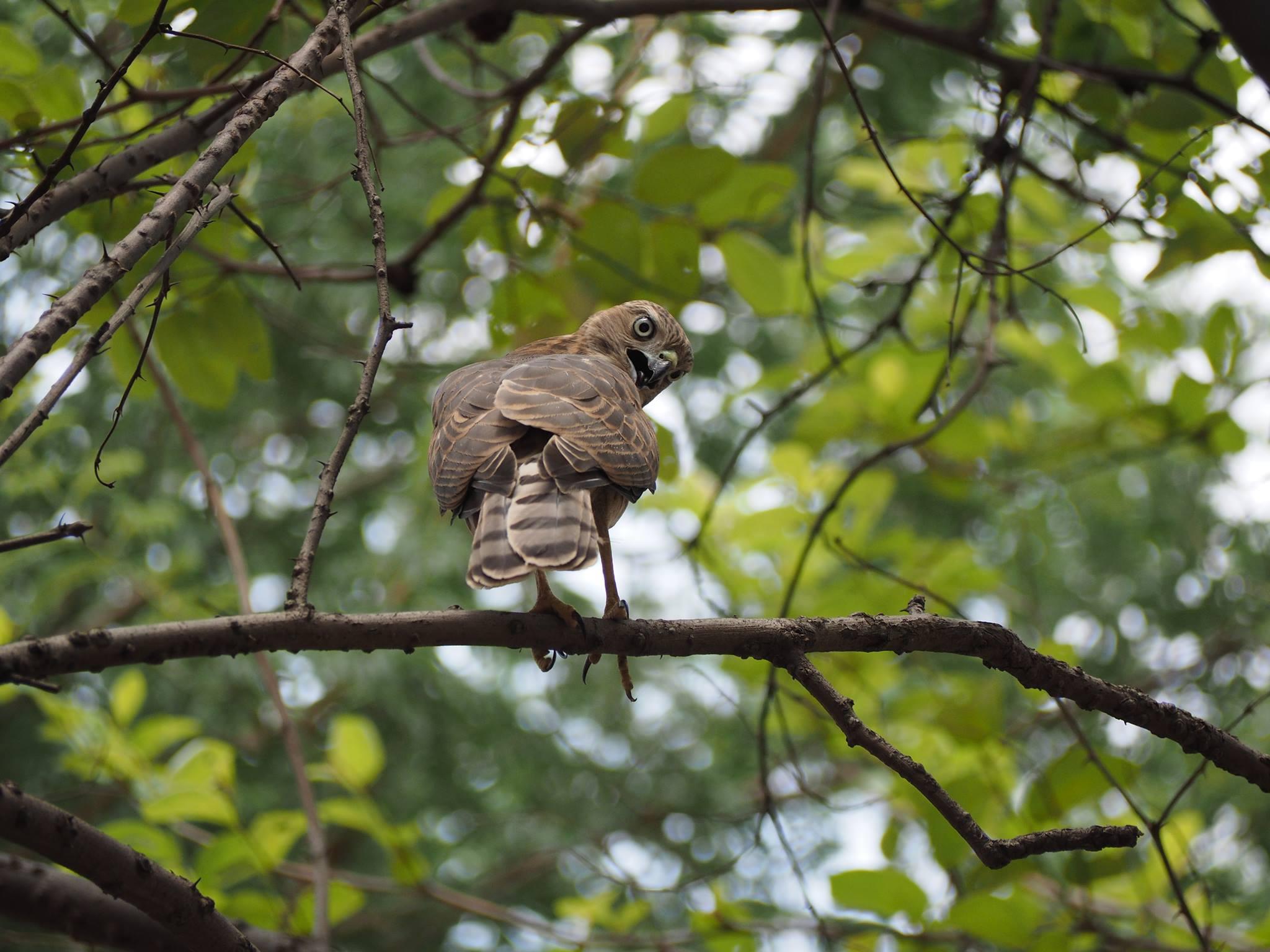 Bird Walk at Okhla Bird Sanctuary
