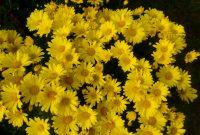 Delhi-NCR Garden and Flower Shows