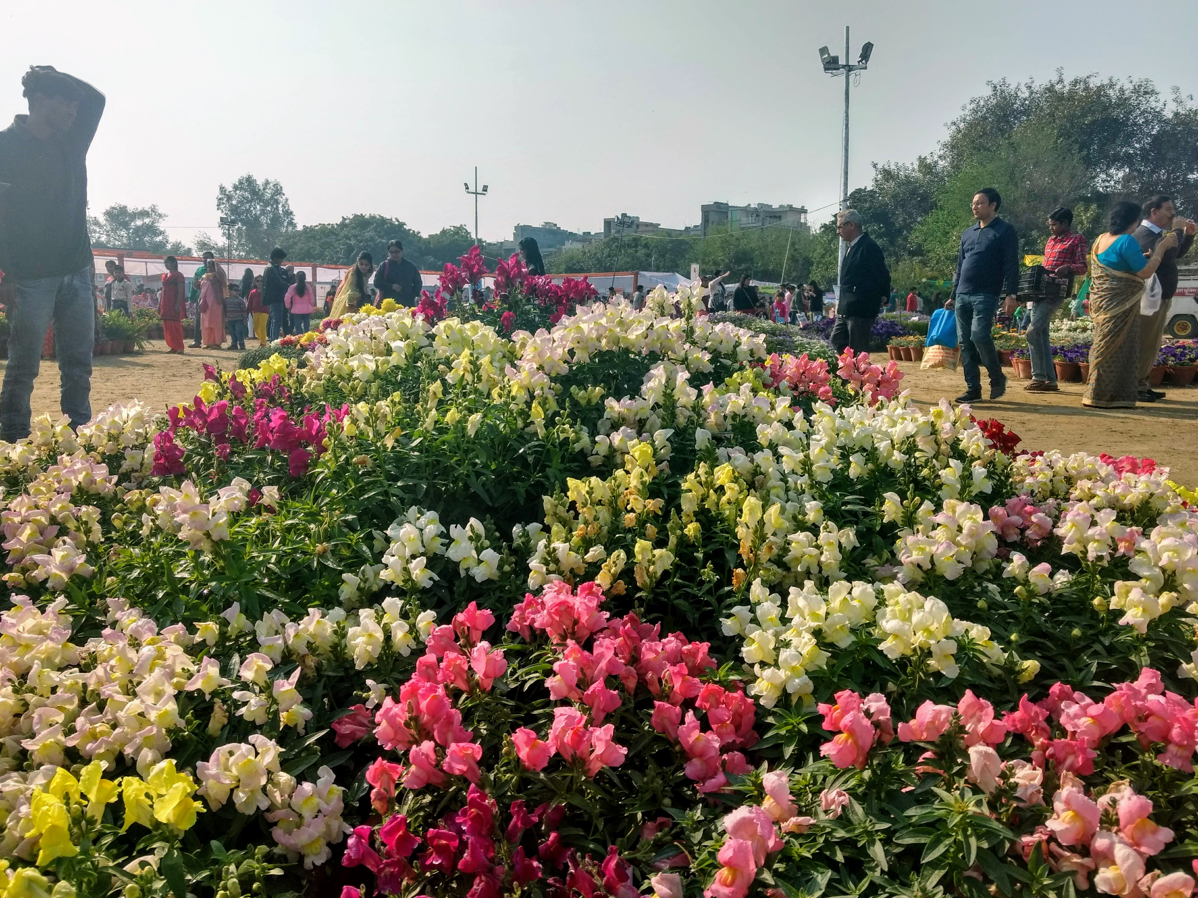 Enjoy the Greater Noida Flower Show 2019 with Family at City park