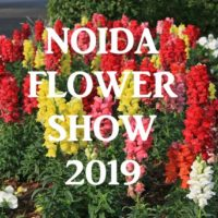 33rd Vasant Utsav – The Noida Flower Show 2019