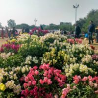 Enjoy the Greater Noida Flower Show 2019 'Pushpotsav' at City Park